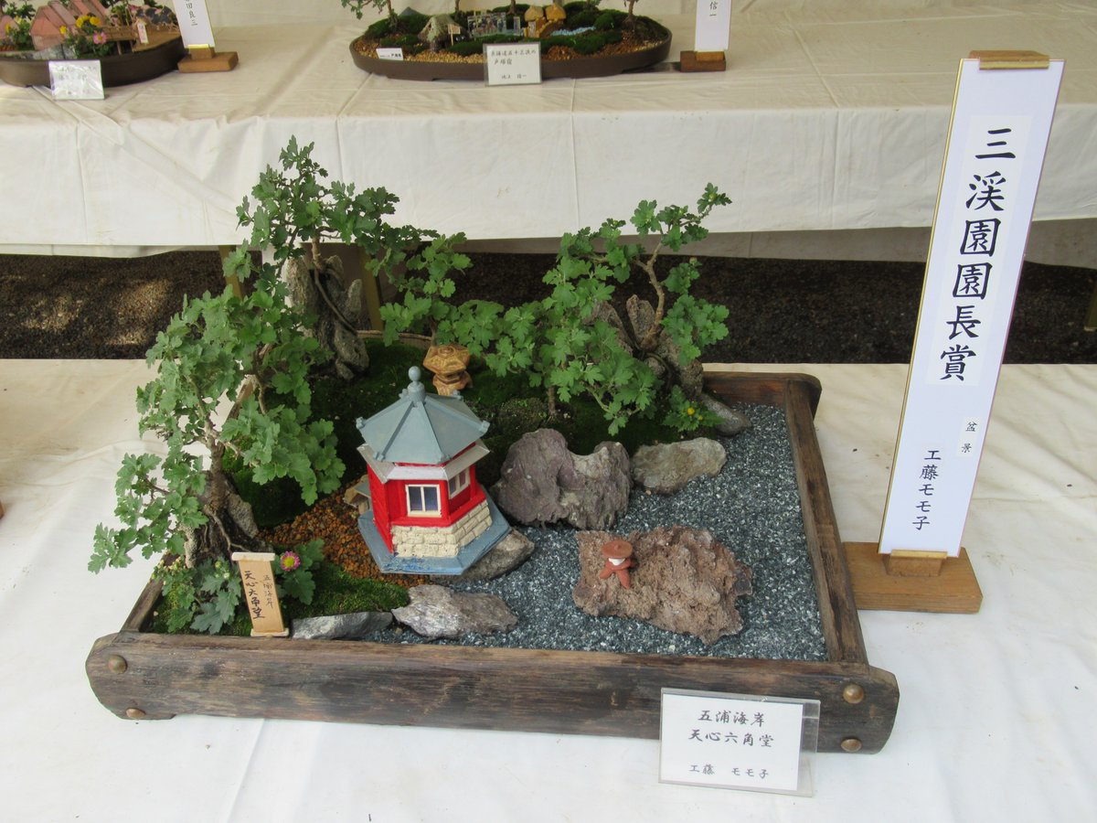 Small Chrysanthemum bonsai & Chrysanthemum Exhibition in Yokohama Sankeien Garden.Director's Award.Gourakaigan Tenshinrokakudou