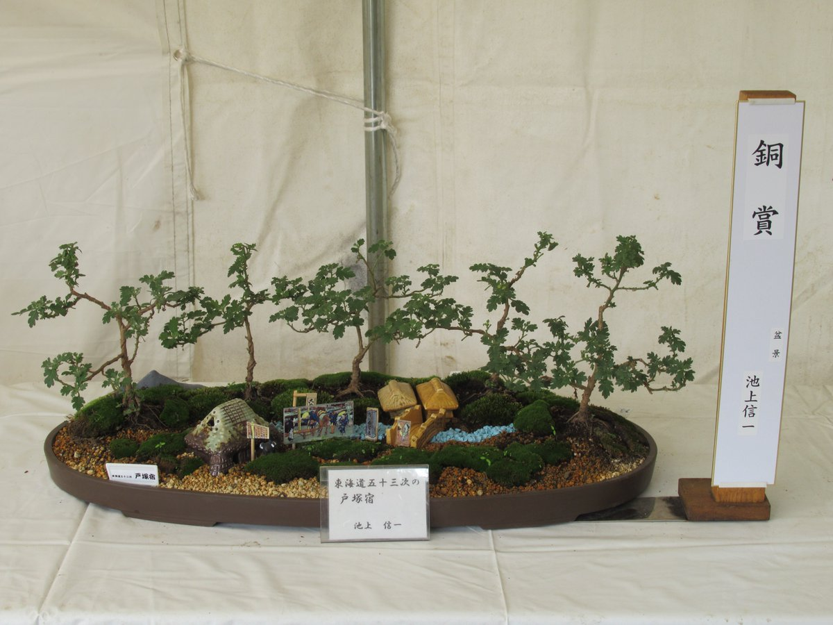 Small Chrysanthemum bonsai & Chrysanthemum Exhibition in Yokohama Sankeien Garden.Bronze-prize.Totuka-jyuku