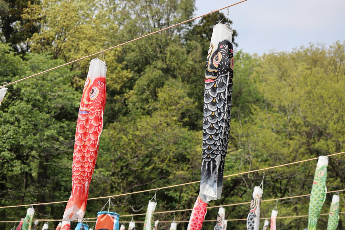 Satoyama Garden・Carp-shaped streamer1