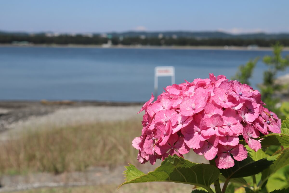 Yokohama Hakkeijima Sea Paradise・Hydrangea・Hydrangea and Sea-2