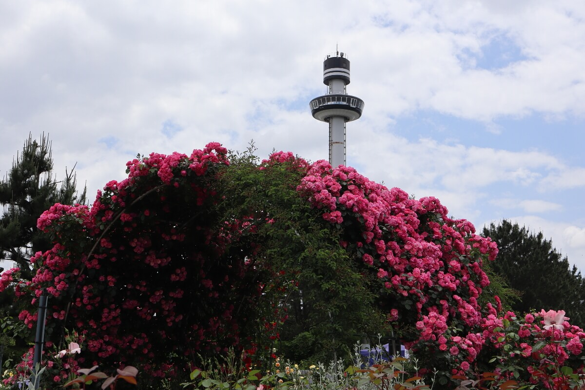 Yokohama Hakkeijima Sea Paradise・Rose Garden-10・With Sea Paradise Tower