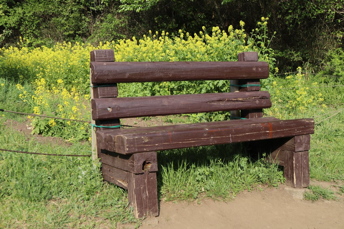 Shiki(Four seasons) Forest Park・bench and Rape blossom