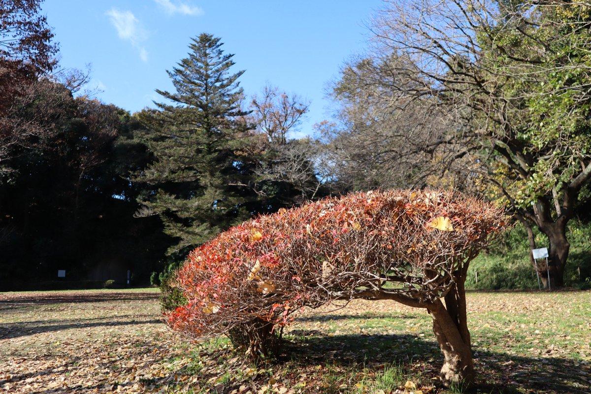 Shoumyouji・front pond紅葉