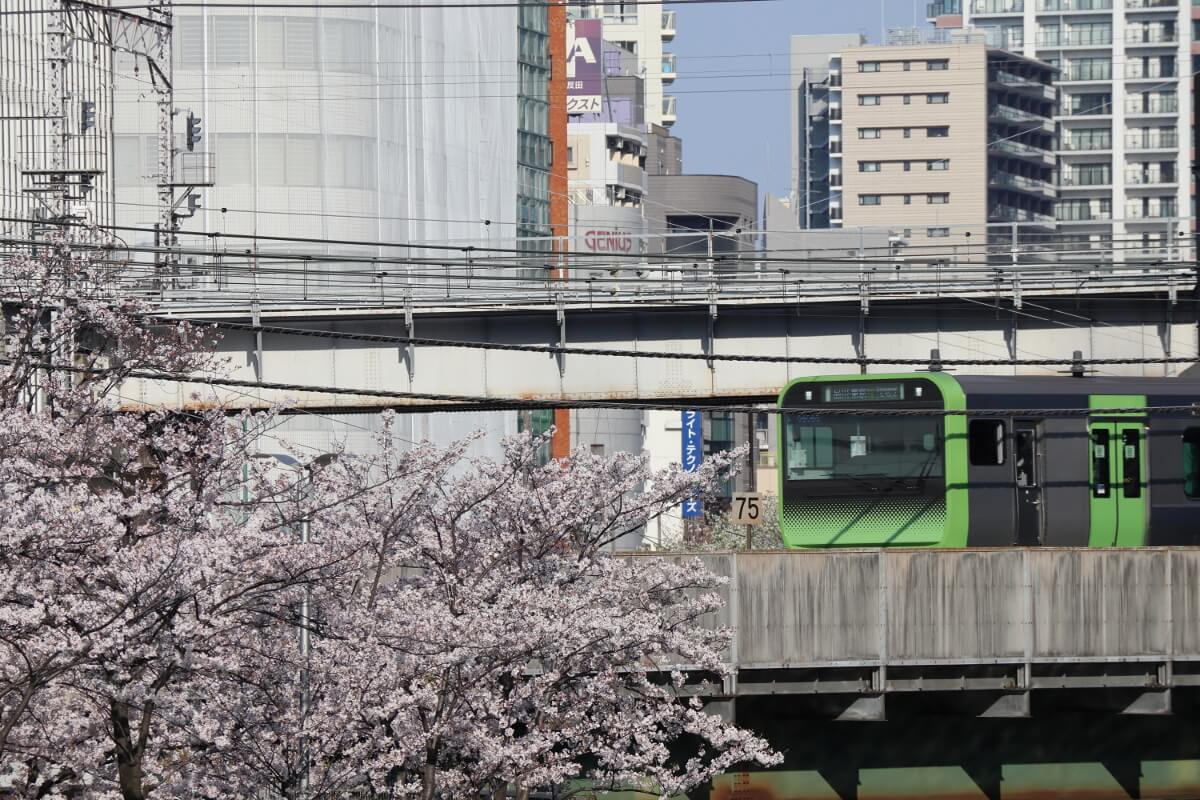 Cherry Blossoms and Yamanote Line,E235
