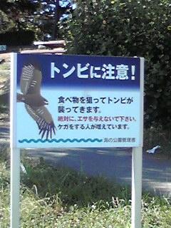海の公園トンビに注意