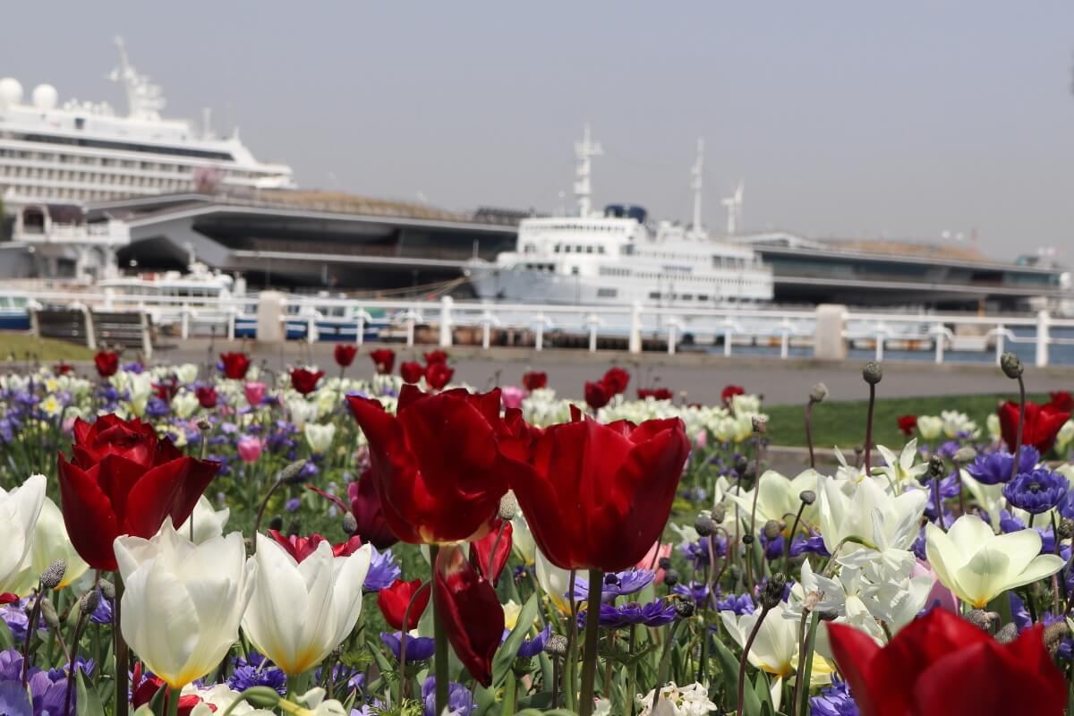 Yamashita Park・Flower and Cruise Ship-4