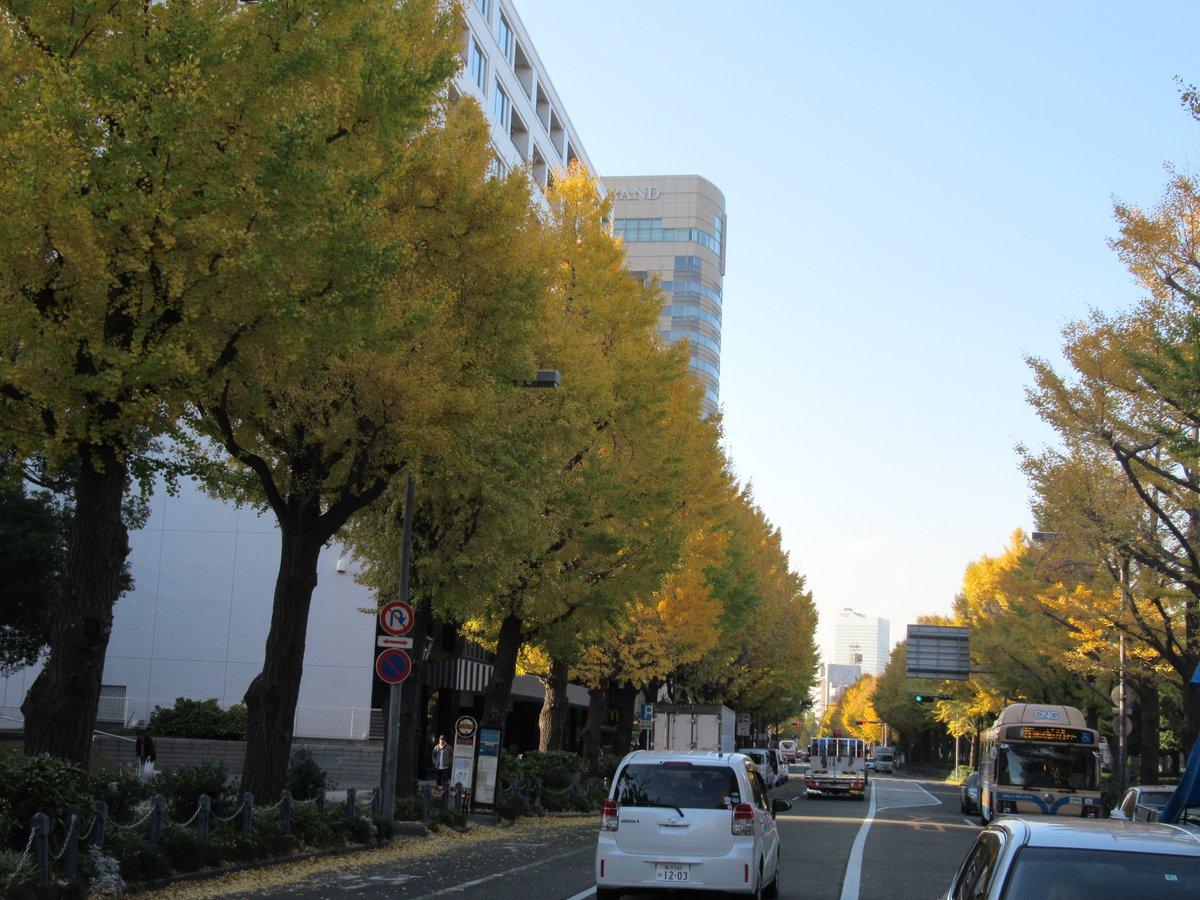 Yamashita Park ・Autumn leaves