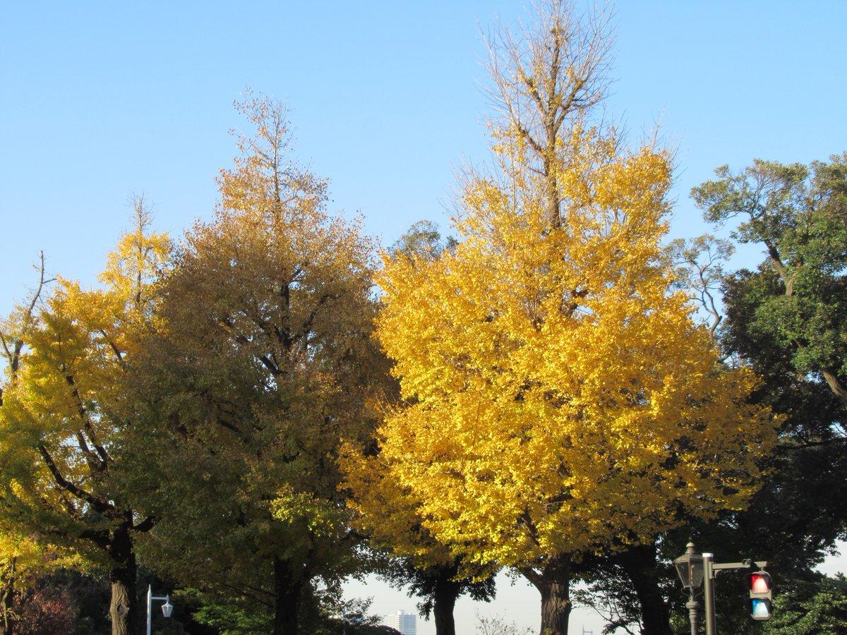 Yamashita Park street・Autumn leaves2