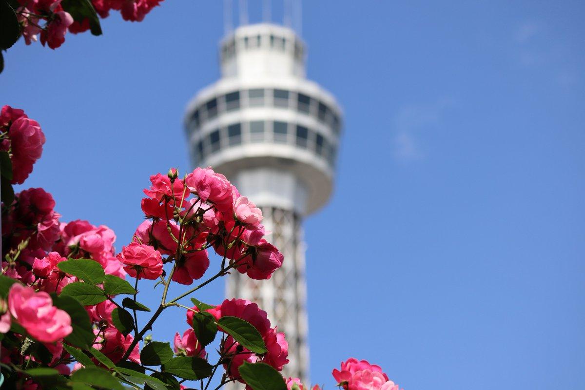 Yamashita Park・Rose and Marine Tower-1