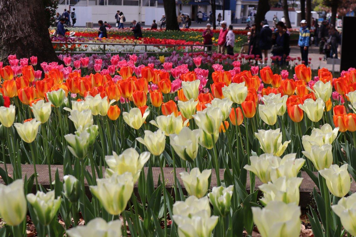 Yokohama Park・tulip-7
