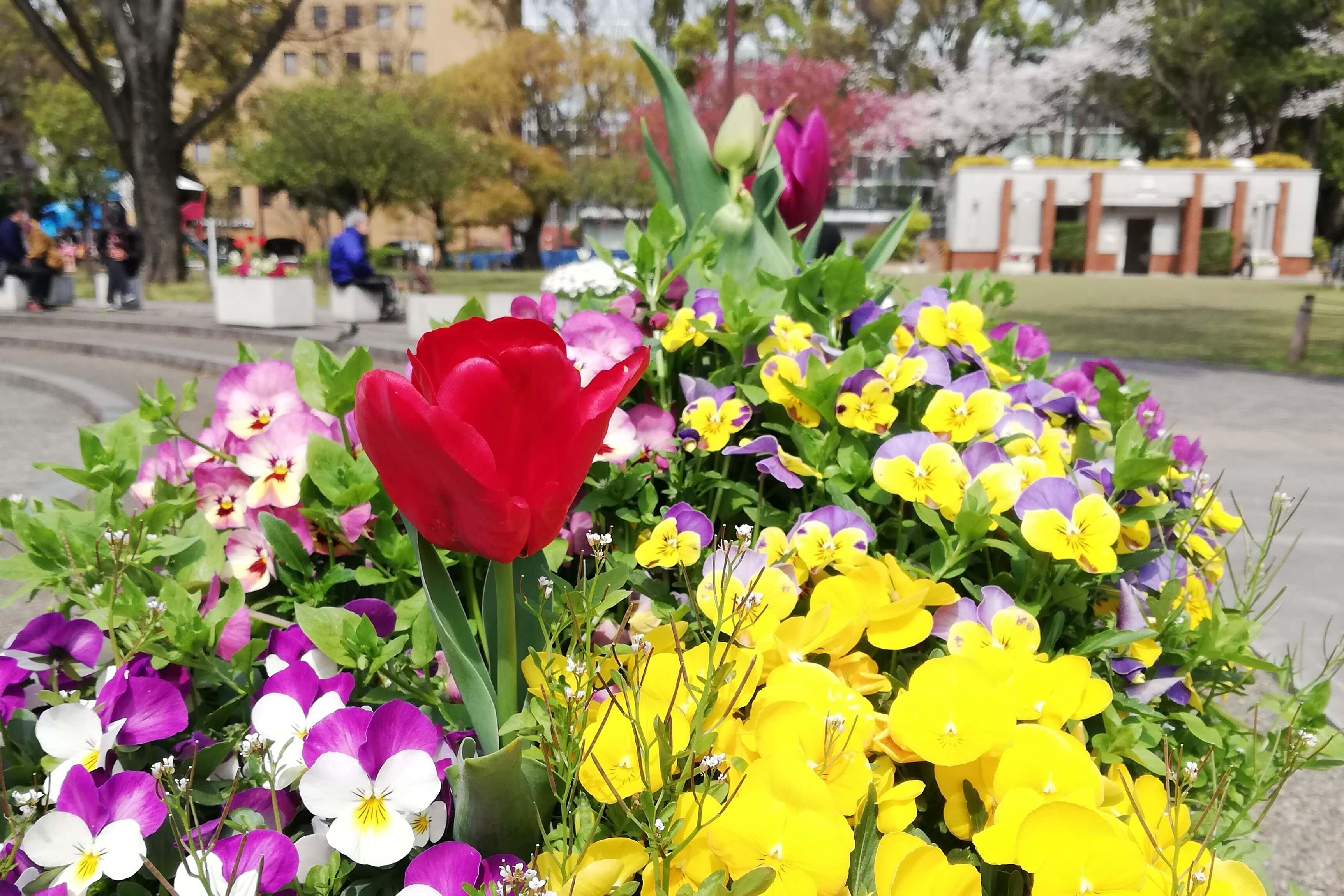 Yokohama Park・tulip20-1