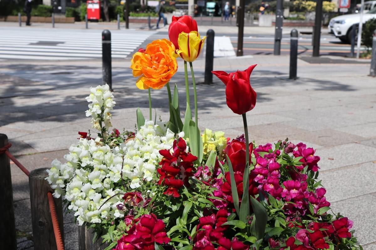 Yokohama Park・tulip20-3