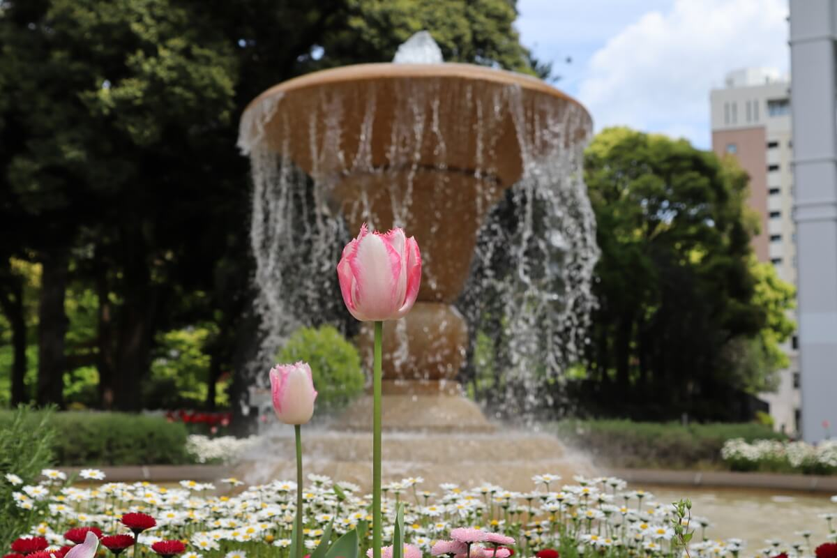 Yokohama Park・tulip20-4・fountain