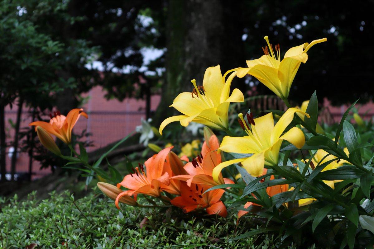 Yokohama Park・Japanese Garden・Lili-1